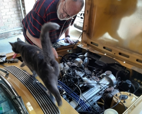 Adrian Gurrie cat giving a hand but we still didn't get it started